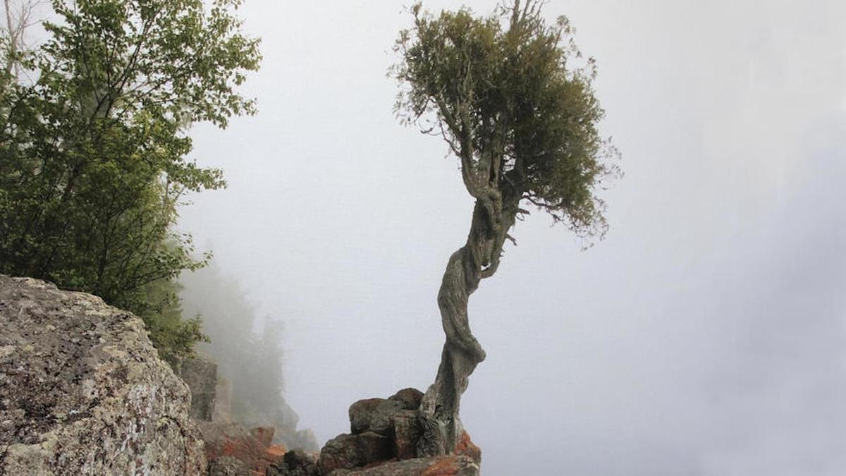 sprit tree stands out amongst the fog