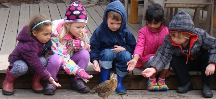 preschoolers reaching out to a young chicken