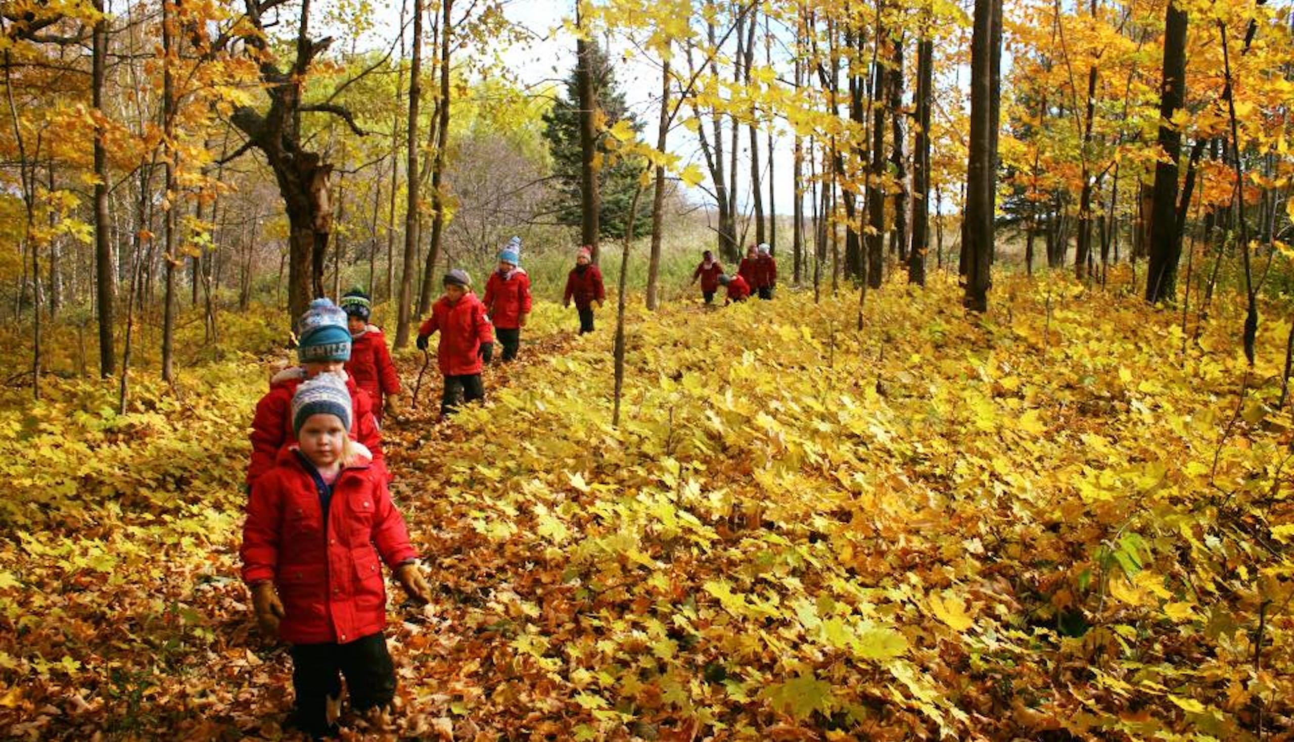Children walking in the woods with autumn leaves